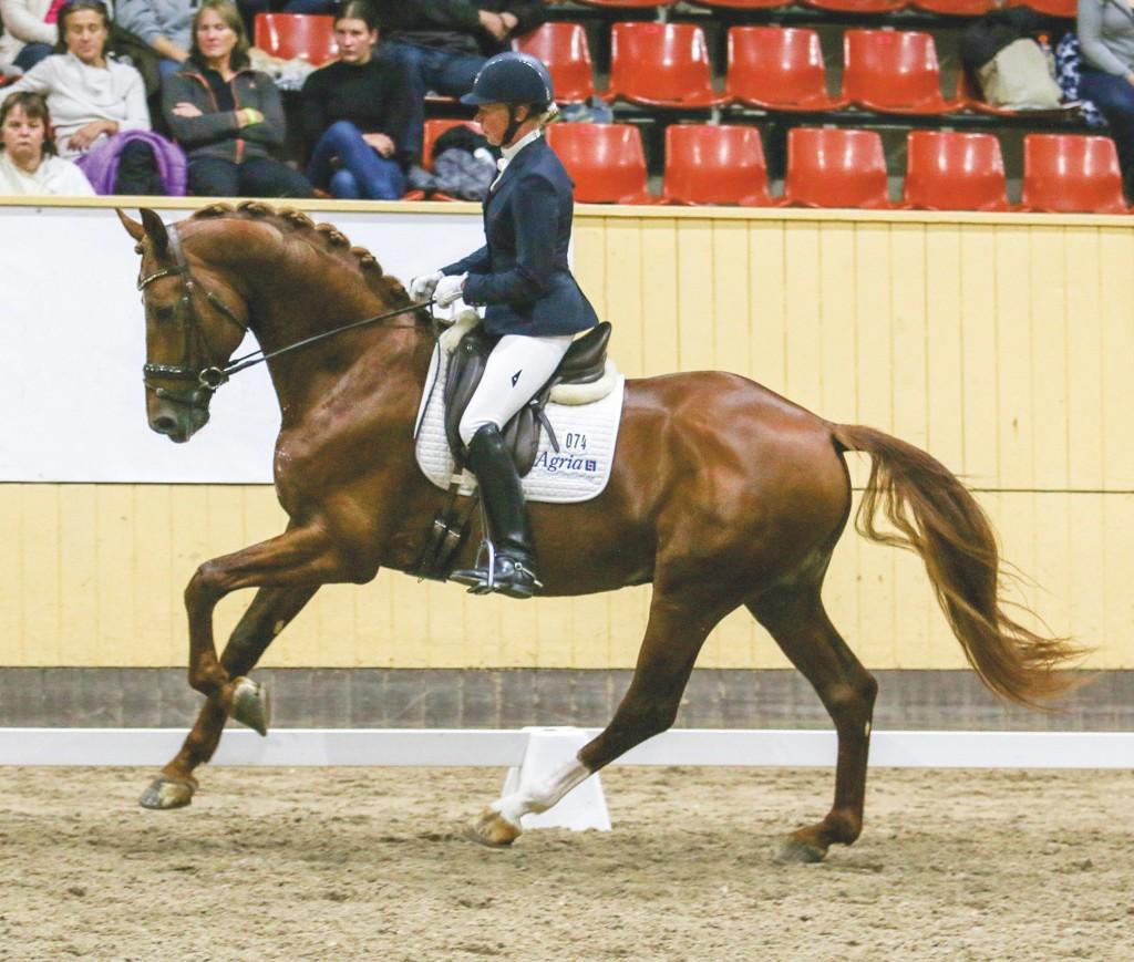 Rose Mathisen Åstorpsortens Ryttarförening 74 Heston for U (SWB) 1311 Stallion / SWB / fx / 2011 / Zuidenwind 1187 x Prestige VDL 1011 / Ugglarps gård AB / Rose Mathisen BT